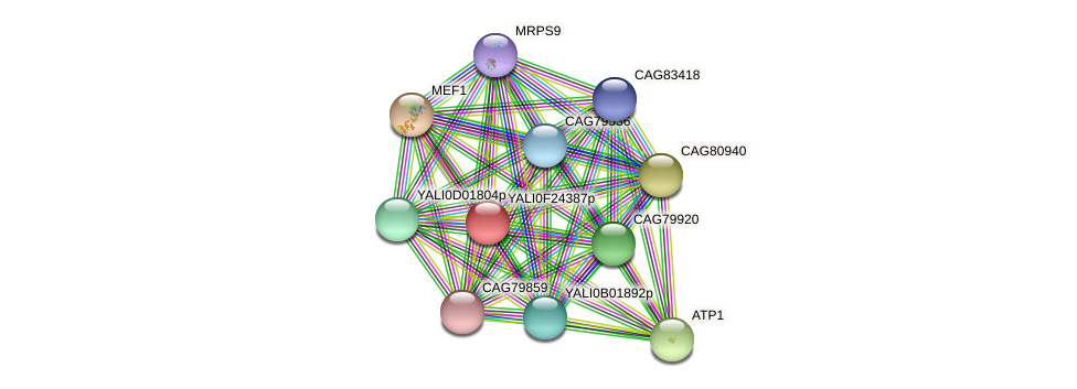 XP_505827.1 protein (Yarrowia lipolytica) - STRING interaction network