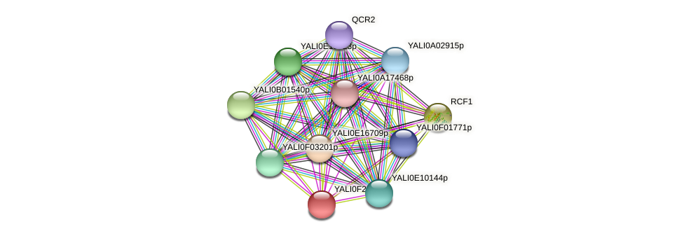 XP_505829.1 protein (Yarrowia lipolytica) - STRING interaction network