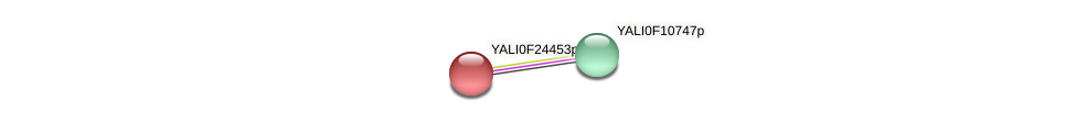 XP_505830.1 protein (Yarrowia lipolytica) - STRING interaction network