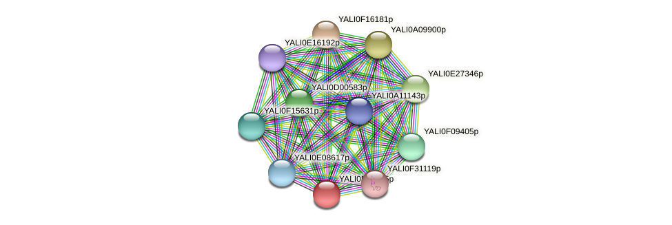 XP_505831.1 protein (Yarrowia lipolytica) - STRING interaction network