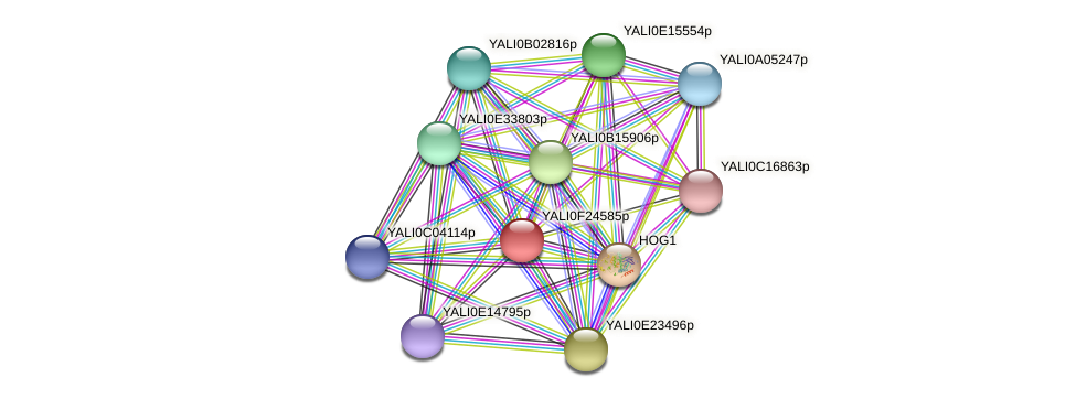 XP_505836.1 protein (Yarrowia lipolytica) - STRING interaction network