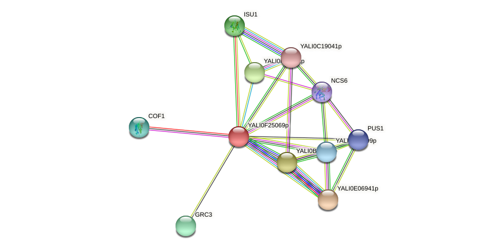 XP_505853.1 protein (Yarrowia lipolytica) - STRING interaction network