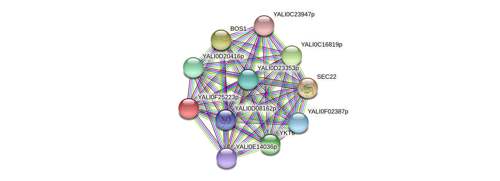 XP_505860.1 protein (Yarrowia lipolytica) - STRING interaction network