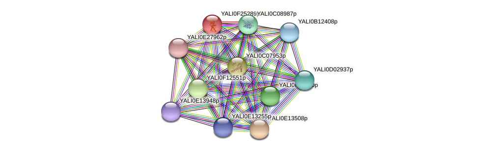 XP_505863.1 protein (Yarrowia lipolytica) - STRING interaction network