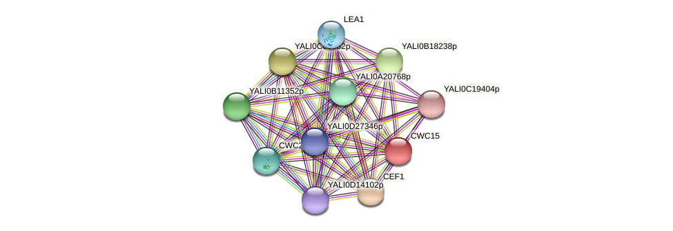 CWC15 protein (Yarrowia lipolytica) - STRING interaction network