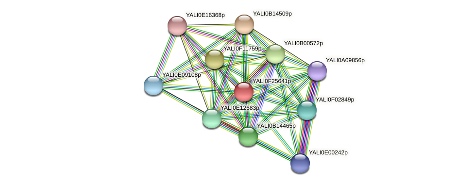 XP_505876.1 protein (Yarrowia lipolytica) - STRING interaction network