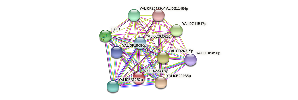 XP_505877.1 protein (Yarrowia lipolytica) - STRING interaction network