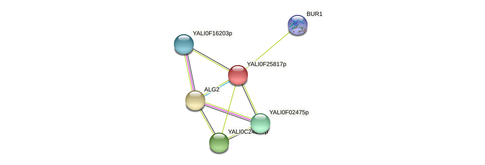 XP_505884.1 protein (Yarrowia lipolytica) - STRING interaction network
