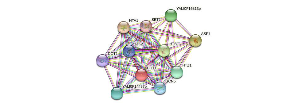 HHT1 protein (Yarrowia lipolytica) - STRING interaction network