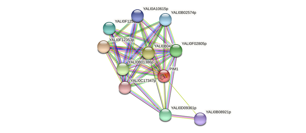 PIM1 protein (Yarrowia lipolytica) - STRING interaction network