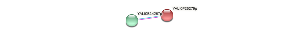 XP_505900.1 protein (Yarrowia lipolytica) - STRING interaction network