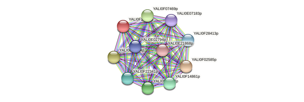XP_505906.1 protein (Yarrowia lipolytica) - STRING interaction network