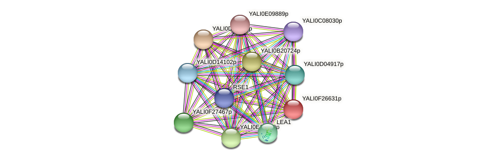 XP_505916.1 protein (Yarrowia lipolytica) - STRING interaction network