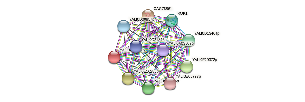 XP_505917.1 protein (Yarrowia lipolytica) - STRING interaction network