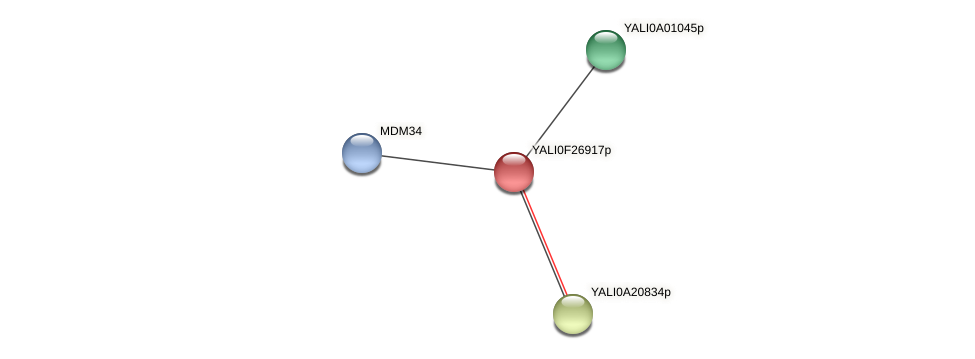 XP_505926.1 protein (Yarrowia lipolytica) - STRING interaction network