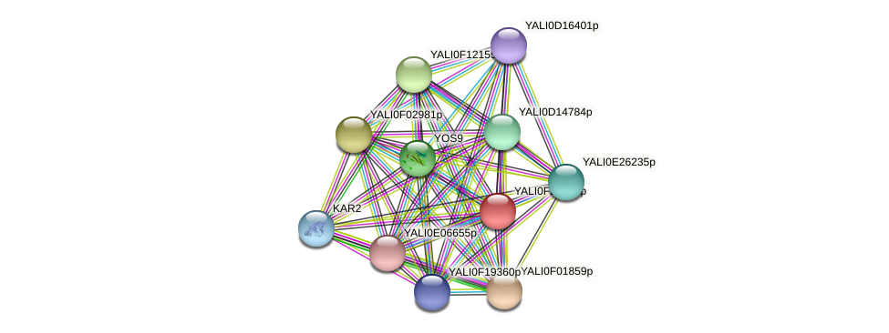 XP_505937.1 protein (Yarrowia lipolytica) - STRING interaction network