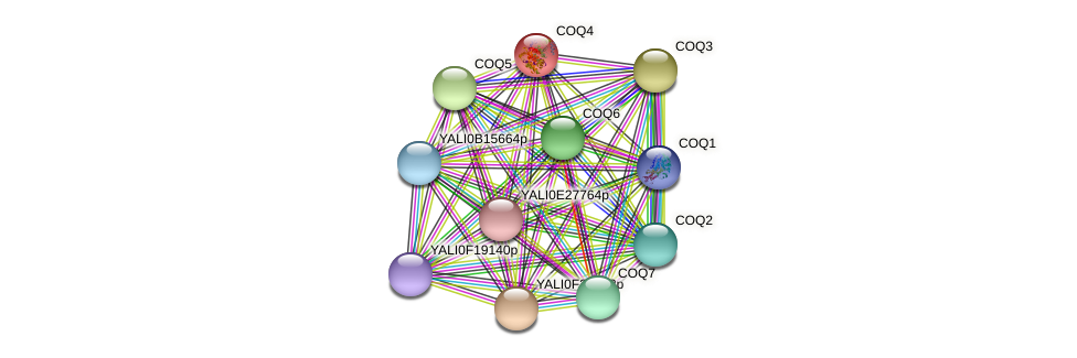 COQ4 protein (Yarrowia lipolytica) - STRING interaction network