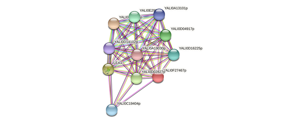 XP_505948.1 protein (Yarrowia lipolytica) - STRING interaction network