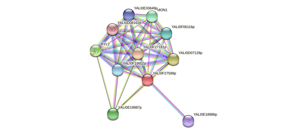XP_505954.1 protein (Yarrowia lipolytica) - STRING interaction network