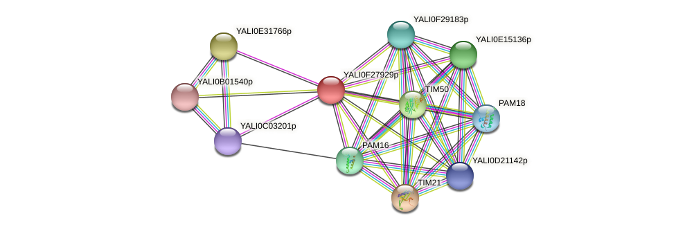 XP_505969.1 protein (Yarrowia lipolytica) - STRING interaction network