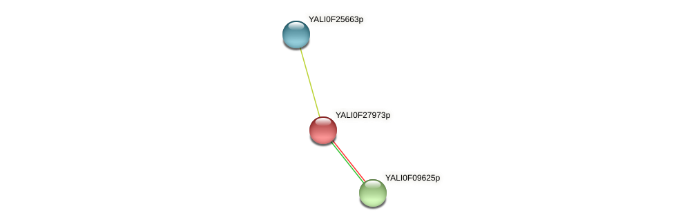 XP_505971.1 protein (Yarrowia lipolytica) - STRING interaction network