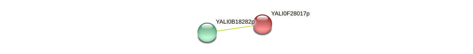 XP_505973.1 protein (Yarrowia lipolytica) - STRING interaction network