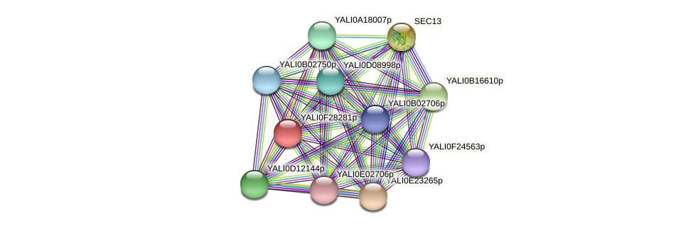 XP_505983.1 protein (Yarrowia lipolytica) - STRING interaction network
