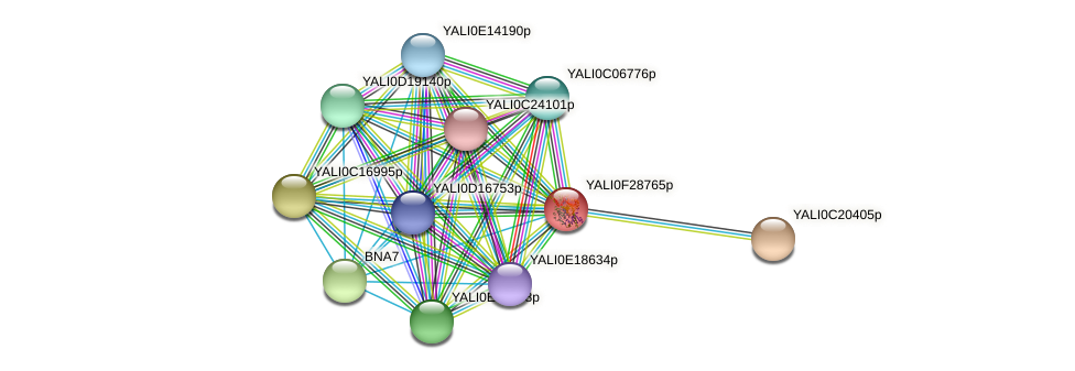 XP_506003.1 protein (Yarrowia lipolytica) - STRING interaction network