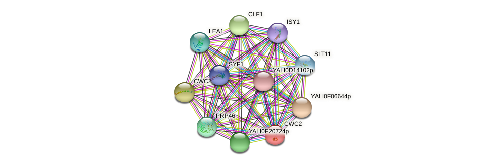 CWC2 protein (Yarrowia lipolytica) - STRING interaction network