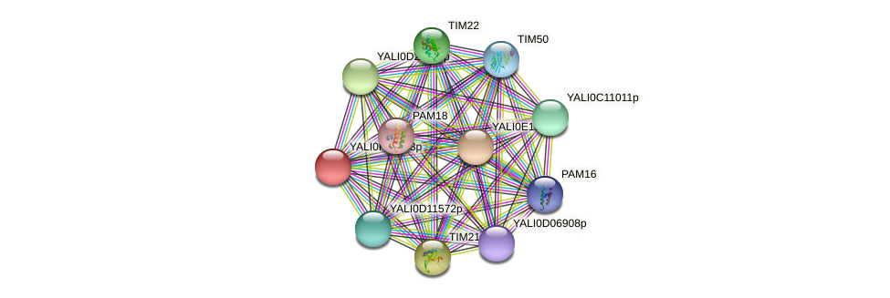 XP_506009.1 protein (Yarrowia lipolytica) - STRING interaction network