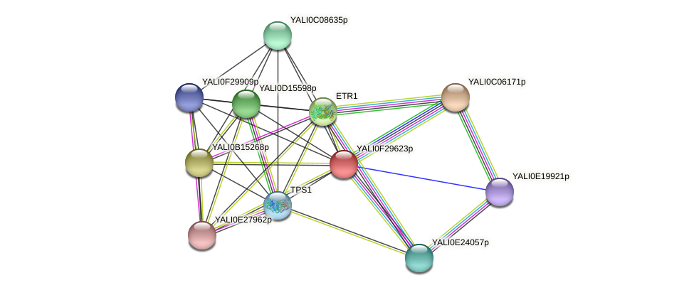 XP_506018.1 protein (Yarrowia lipolytica) - STRING interaction network