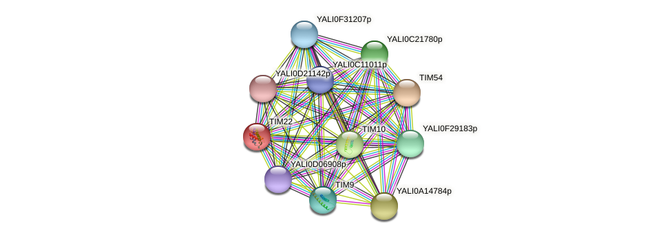 TIM22 protein (Yarrowia lipolytica) - STRING interaction network