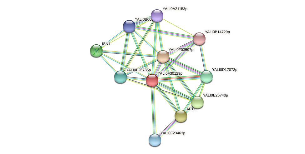 XP_506036.1 protein (Yarrowia lipolytica) - STRING interaction network