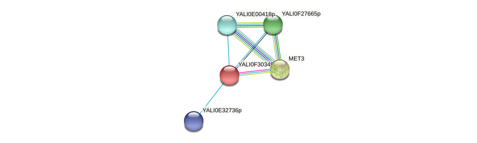 XP_506046.1 protein (Yarrowia lipolytica) - STRING interaction network