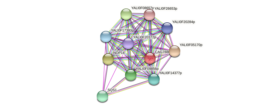 XP_506048.1 protein (Yarrowia lipolytica) - STRING interaction network