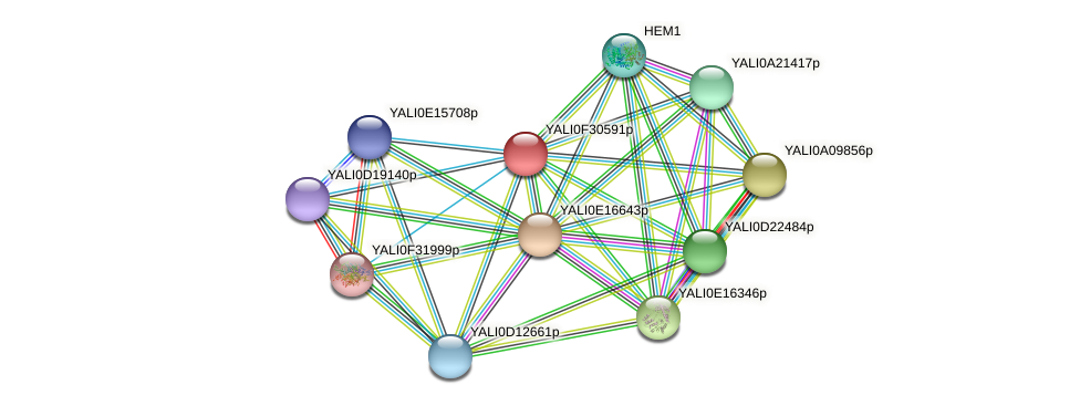 XP_506057.1 protein (Yarrowia lipolytica) - STRING interaction network
