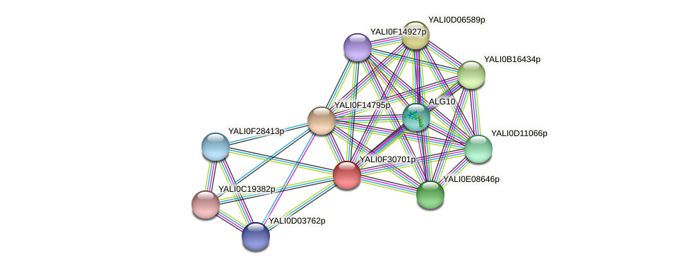 XP_506062.1 protein (Yarrowia lipolytica) - STRING interaction network