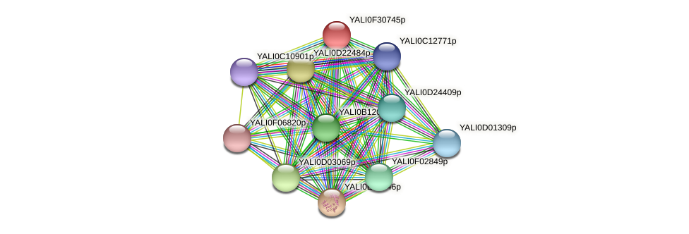XP_506064.1 protein (Yarrowia lipolytica) - STRING interaction network