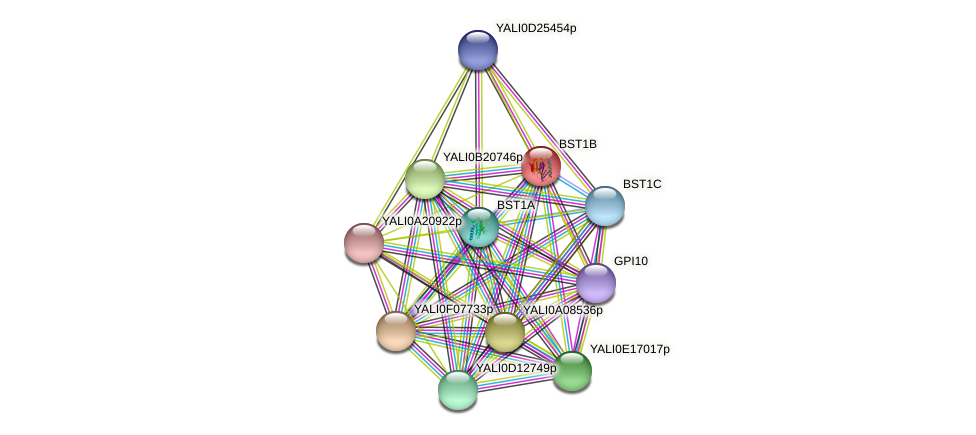 BST1B protein (Yarrowia lipolytica) - STRING interaction network