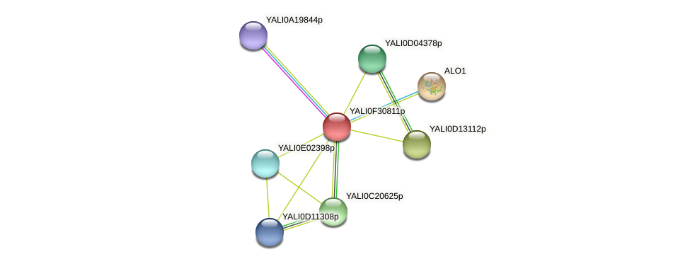 XP_506067.1 protein (Yarrowia lipolytica) - STRING interaction network