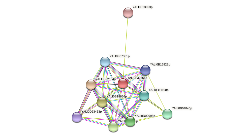 XP_506069.1 protein (Yarrowia lipolytica) - STRING interaction network