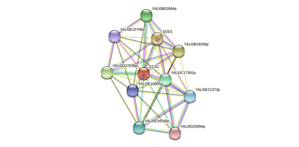 CCS1 protein (Yarrowia lipolytica) - STRING interaction network
