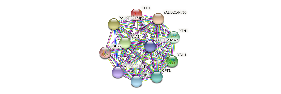 CLP1 protein (Yarrowia lipolytica) - STRING interaction network