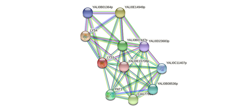 LYS1 protein (Yarrowia lipolytica) - STRING interaction network