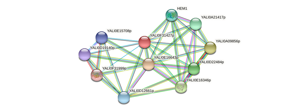 XP_506095.2 protein (Yarrowia lipolytica) - STRING interaction network