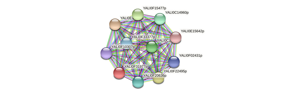 XP_506116.1 protein (Yarrowia lipolytica) - STRING interaction network