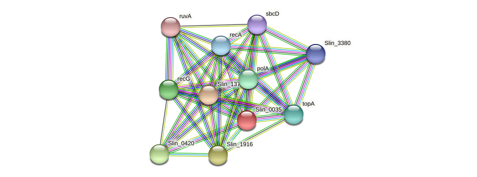 Slin_0035 protein (Spirosoma linguale) - STRING interaction network