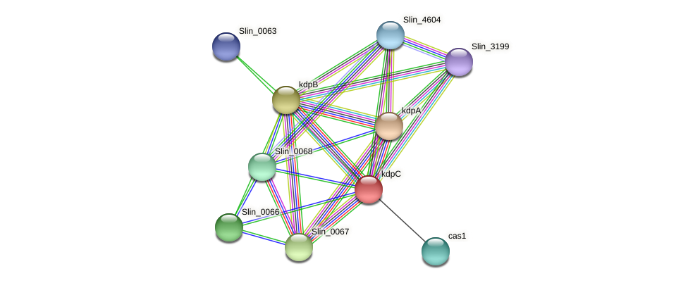 kdpC protein (Spirosoma linguale) - STRING interaction network
