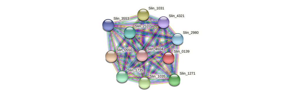 Slin_0139 protein (Spirosoma linguale) - STRING interaction network