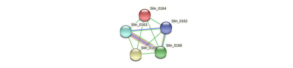 Slin_0164 protein (Spirosoma linguale) - STRING interaction network